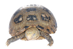 Animal turtle tortoise Royalty Free Stock Images