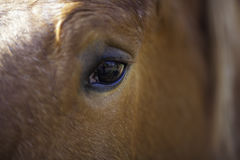 Animal vision. Horse eye view. This selective focus close up of a horse eye reveals a reflection of the horse's own view including its own shadow and Royalty Free Stock Photography