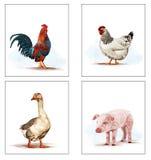 Animal-viver-em--exploração agrícola Fotografia de Stock