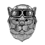 Animal wearing aviator helmet with glasses. Vector picture. Brithish noble cat Male Hand drawn image for tattoo, emblem. Brithish noble cat Male Hand drawn image Royalty Free Stock Photography