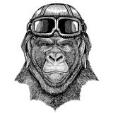 Animal wearing aviator helmet with glasses. Vector picture. Gorilla, monkey, ape Frightful animal Hand drawn image for. Gorilla, monkey, ape Frightful animal Royalty Free Stock Image
