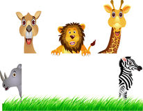 Animal and white banner Stock Image