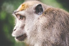animal-wilderness-zoo-monkey Royalty Free Stock Photos