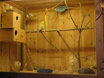 Animal windows bird house cage parrot family art royalty free stock photos