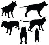 Animal wolf silhouette Royalty Free Stock Images