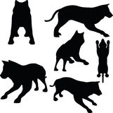 Animal wolf silhouette on white background Stock Images