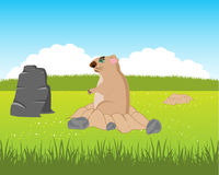 Animal woodchuck beside burrows. The Animal rodent woodchuck peers out burrow.Vector illustration Stock Photos