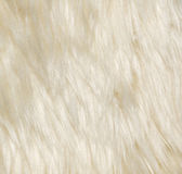 Animal wool Royalty Free Stock Image