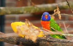 Animal, World, Avian Stock Image