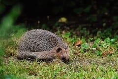 Animal, World, Blur Royalty Free Stock Image
