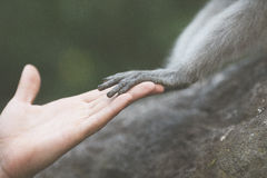 Animal y ser humano del saludo Fotografía de archivo