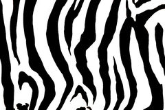 Animal zebra  background Royalty Free Stock Photography