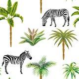 Animal zebra palm trees cactus seamless white background Royalty Free Stock Photography