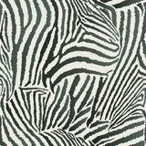 Animal Zebra Seamless Background Stock Image