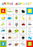 Animal zoo alphabet poster. Cute cartoon character set. Isolated. White background Flat design. Baby children education. Alligator. Animal zoo alphabet poster Stock Images