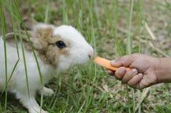 Animale Fotografie Stock Libere da Diritti