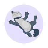 Animale adorabile lanuginoso del fumetto del gattino della razza del gatto del ritratto grigio sveglio dell'animale domestico il  illustrazione vettoriale