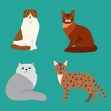 Animale adorabile lanuginoso del fumetto del ritratto sveglio dell'animale domestico della razza del gatto il giovane ed il diver illustrazione vettoriale