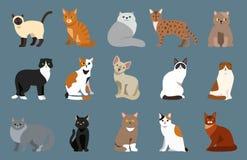 Animale adorabile lanuginoso del fumetto del ritratto sveglio dell'animale domestico della razza del gatto il giovane ed il diver illustrazione di stock