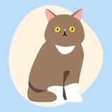 Animale adorabile lanuginoso del fumetto di marrone sveglio dell'animale domestico della razza del gatto il giovane ed il diverti Immagini Stock