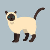 Animale adorabile lanuginoso nero bianco del fumetto dell'animale domestico sveglio siamese della razza del gatto il giovane ed i royalty illustrazione gratis