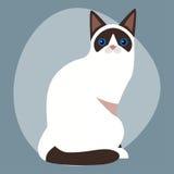 Animale adorabile nero bianco lanuginoso del fumetto del ritratto sveglio siamese dell'animale domestico della razza del gatto e  illustrazione di stock