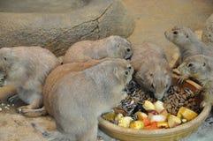 Animale alimento Fotografia Stock