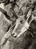 Animale cercato fotografia stock libera da diritti
