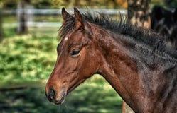 Animale del cavallo in giungla fotografia stock