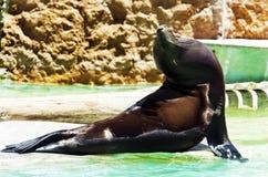 Animale del giardino zoologico fotografia stock libera da diritti