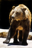 Animale del giardino zoologico Fotografie Stock