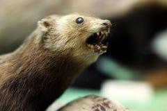 Animale del pericolo fotografie stock