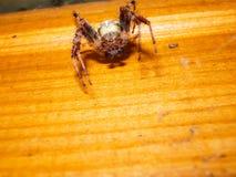 Animale dell'artropodo del ragno fotografie stock libere da diritti