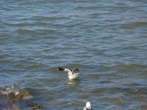 animale dell'uccello del gabbiano fotografia stock libera da diritti