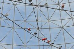 Animale dell'uccello dell'ibis Fotografia Stock