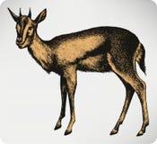 Animale della gazzella, a mano disegno Illustrazione di vettore Immagini Stock