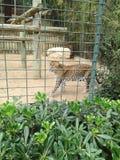 Animale dello zoo Immagini Stock Libere da Diritti