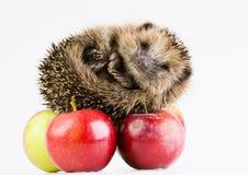 Animale di autunno Fotografie Stock Libere da Diritti