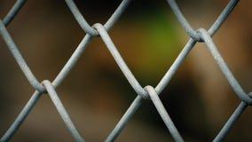 Animale dietro il recinto di filo metallico Abstract archivi video