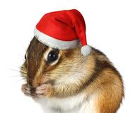 Animale divertente con il cappello di Santa Claus, il Buon Natale e nuovo felice Fotografie Stock