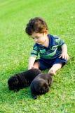 animale domestico fotografie stock