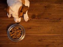 Animale domestico che mangia alimento fotografia stock libera da diritti