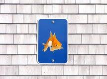 Animale domestico che parcheggia soltanto i goldfishes di umore del segno Immagini Stock