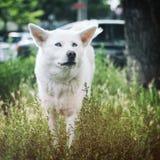 Animale domestico con personalità Immagini Stock Libere da Diritti