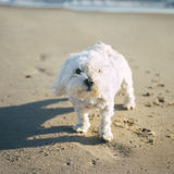 Animale domestico con personalità Immagine Stock Libera da Diritti