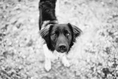 Animale domestico con personalità Fotografia Stock Libera da Diritti