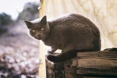 Animale domestico con personalità Fotografia Stock