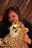 Animale domestico del ghepardo Immagine Stock Libera da Diritti