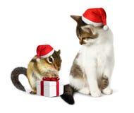 Animale domestico divertente di natale, scoiattolo divertente e gatto con il cappello di Santa ed il g Fotografie Stock Libere da Diritti