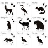Animale e tracce e siluette dell'uccello con il nome Insieme di vettore royalty illustrazione gratis